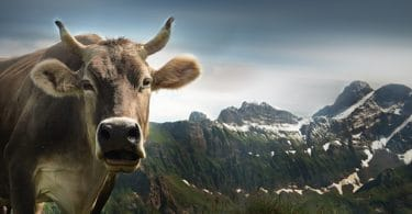 Alpes Suizos - Que hacer y que ver